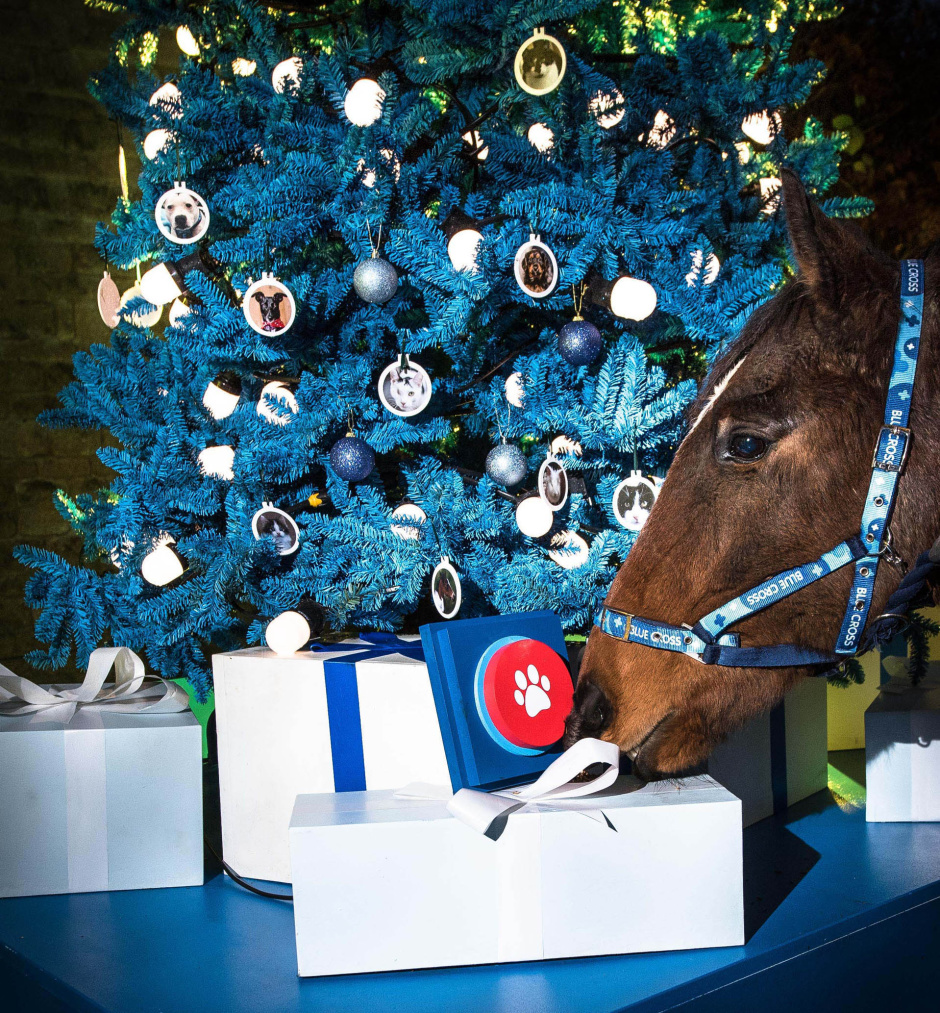"Banks the horse investigates the ""On"" switch for the world's first donation-powered Christmas tree for pet charity Blue Cross: the tree's lights will only illuminate in response to people's donations to the charity in the lead up to 24 December. The tree has been set up at the Blue Cross Burford rehoming centre to help light up Christmas for the hundreds of pets that will be in the care of the charity over the festive season."