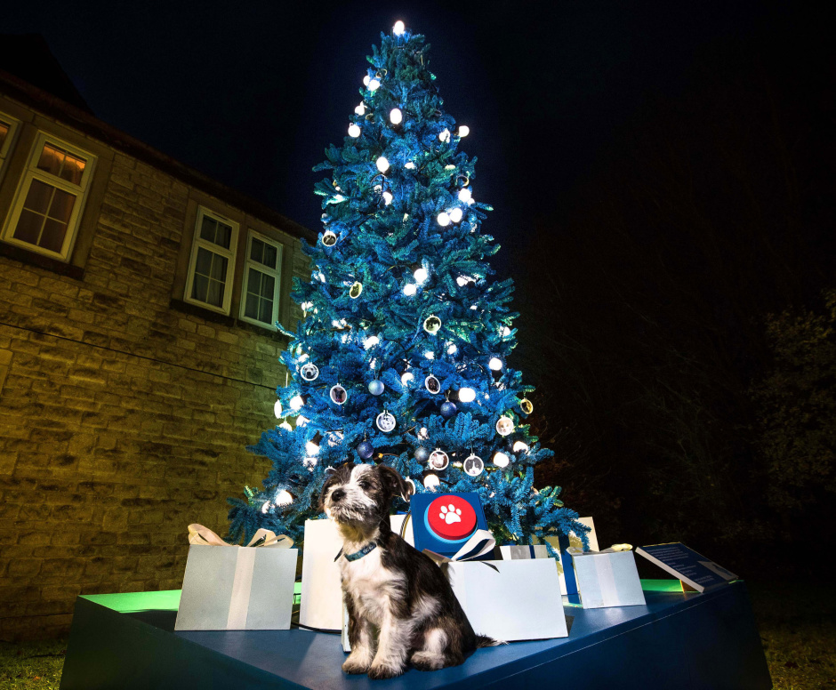 Max the jack russell puppy stands in front of the first donation-powered Christmas tree for pet charity Blue Cross: the tree's lights will only illuminate in response to people's donations to the charity in the lead up to 24 December. This picture shows how the tree will look if fully illumiated thanks to donations made by the public. This photo shows how the tree will look once fully illuminated. Max was abandoned by an unscrupulous seller and brought to Blue Cross as a frightened puppy, but he's now been rehomed and is looking forward to spending his first Christmas with a loving new family. He returned to the Blue Cross Burford rehoming centre to switch on the very special illuminations and do his part to light up Christmas for the hundreds of pets that will be in the care of the charity over  the festive season.