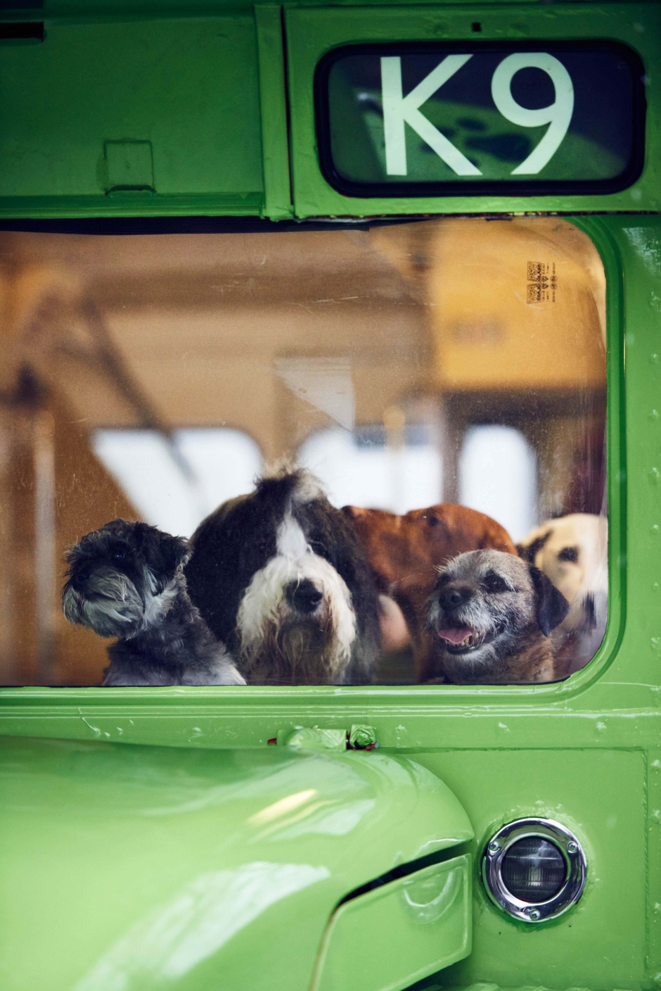 MORE TH>N DOGGYSSENTI>LS launches the world's first tour bus for dogs. The green number K9 Routemaster bus will take dogs (and their owners) to some of LondonÕs best parks and city centre dog walking spots, including Hyde Park, Kensington Palace Gardens and Green Park. Along the way, live onboard commentary for dog owners lifts the lid on LondonÕs rich canine history, including the ministerial dogs of Downing Street, the many corgis that have shared Buckingham Palace with the Queen and the location of LondonÕs only dog cemetery. This picture: canine passengers onboard the MORE TH>N DOGGYSSENTI>LS tour bus for dogs. For further information please contact Rachel Aldersley at Cow PR on 020 7234 9156 or morethan@cowpr.com PR Handout - free for editorial usage. Copyright: © Mikael Buck / MORE TH>N DOGGYSSENTI>LS