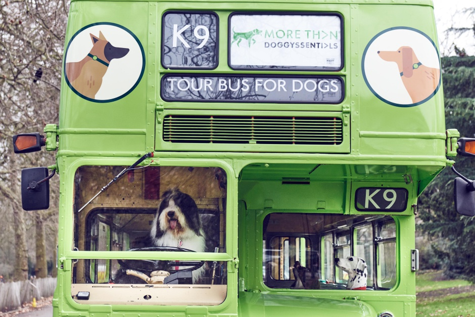 MORE TH>N DOGGYSSENTI>LS launches the world's first tour bus for dogs. The green number K9 Routemaster bus will take dogs (and their owners) to some of LondonÕs best parks and city centre dog walking spots, including Hyde Park, Kensington Palace Gardens and Green Park. Along the way, live onboard commentary for dog owners lifts the lid on LondonÕs rich canine history, including the ministerial dogs of Downing Street, the many corgis that have shared Buckingham Palace with the Queen and the location of LondonÕs only dog cemetery. This picture: several canine passengers take their seats onboard the MORE TH>N DOGGYSSENTI>LS tour bus for dogs. For further information please contact Rachel Aldersley at Cow PR on 020 7234 9156 or morethan@cowpr.com PR Handout - free for editorial usage. Copyright: © Mikael Buck / MORE TH>N DOGGYSSENTI>LS