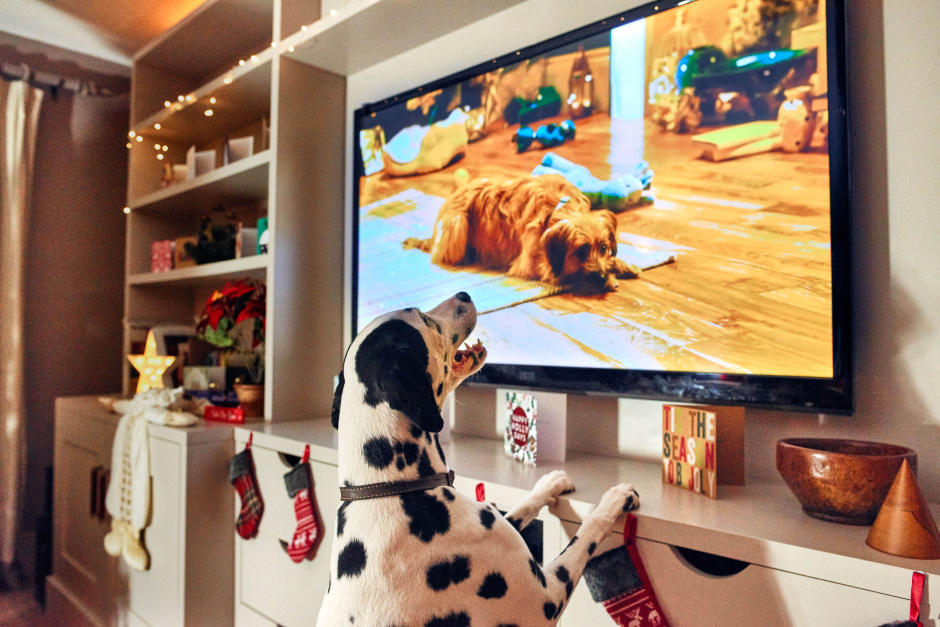 Alma the Dalmation is excited to watch the first Christmas film for dogs called 'Merry Woofmas' narrated by Louis Walsh