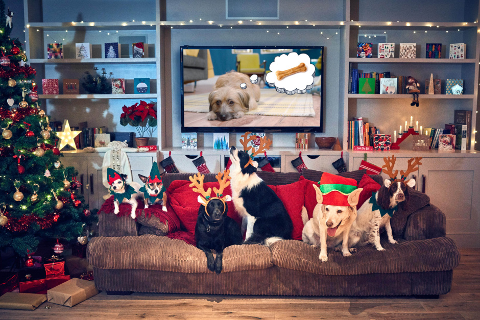 Dogs get comfy on the sofa to watch the first Christmas film for dogs called 'Merry Woofmas' narrated by Louis Walsh